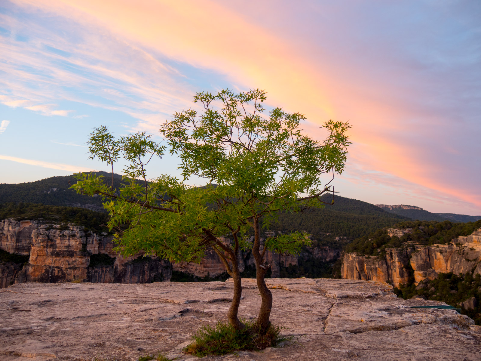 Siurana Sunset Tree