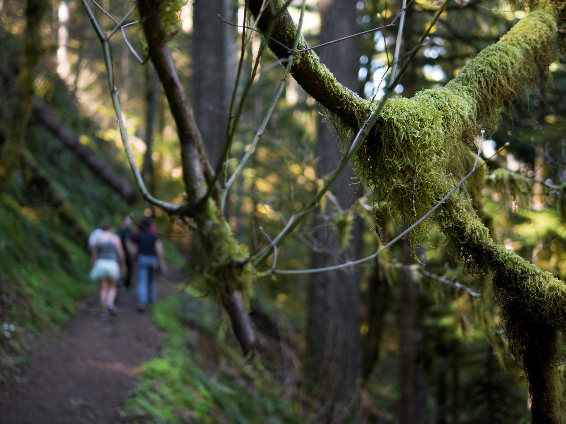 walking moss