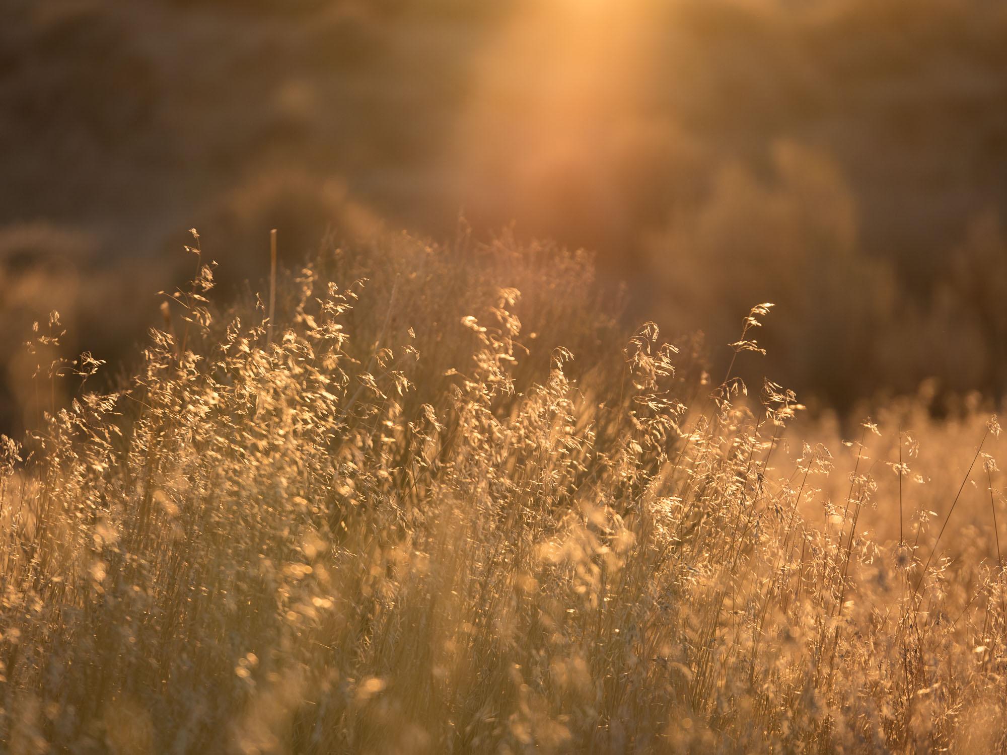 lit grass